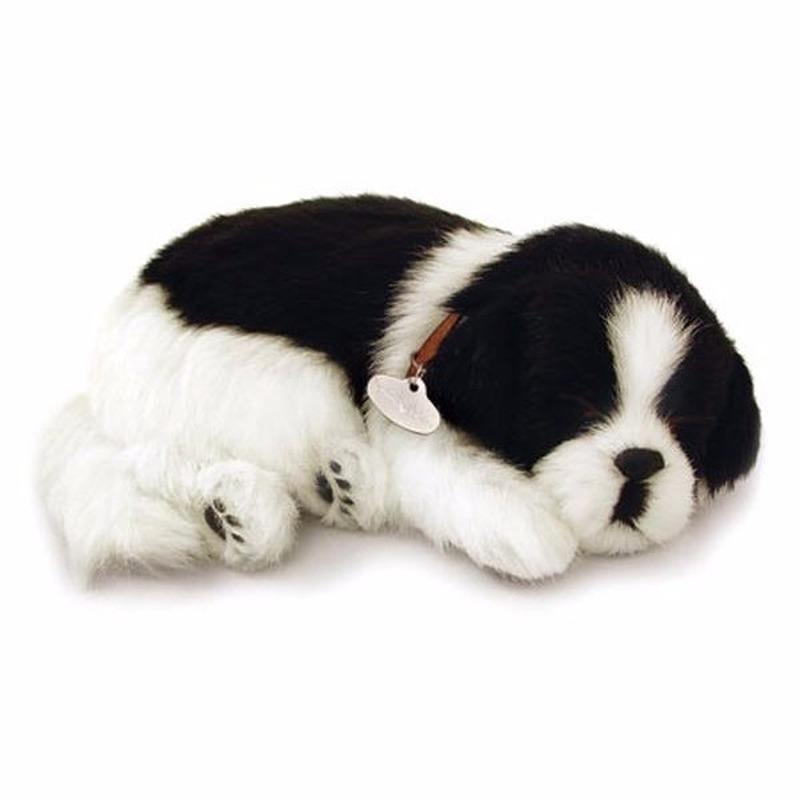 Echte slapende Border Collie pup