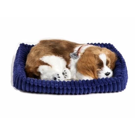Echte slapende Cavalier King Charles pup