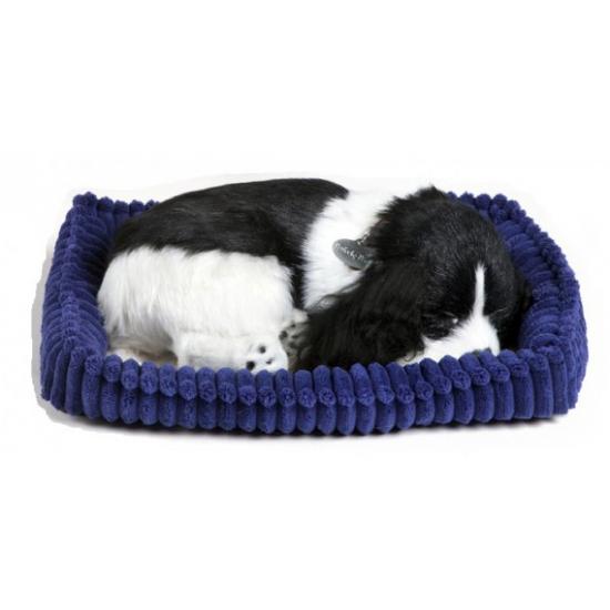 Echte slapende Cocker Spaniel pup