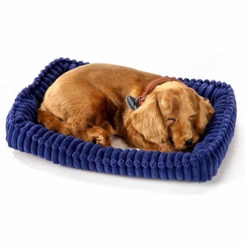 Echte slapende Dachshund pup