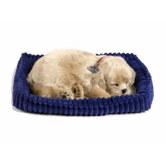 Echte slapende Golden Retriever pup