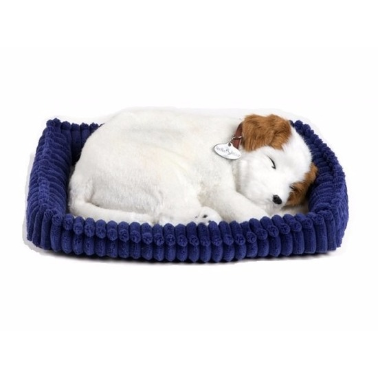 Echte slapende Jack Russel pup