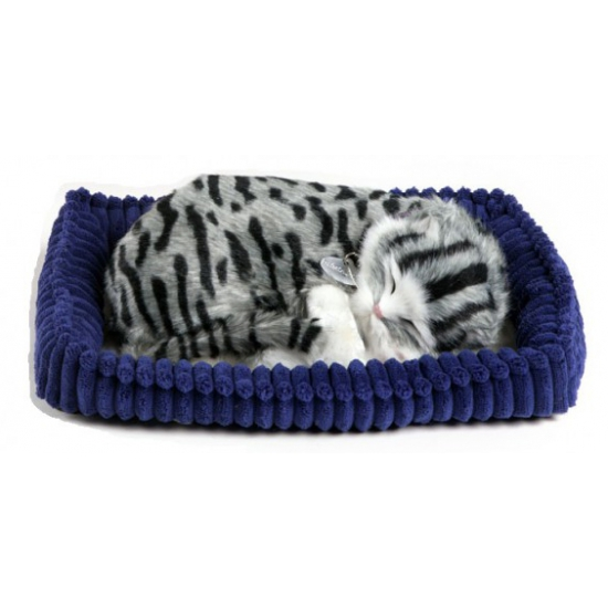 Echte slapende kitten grijs