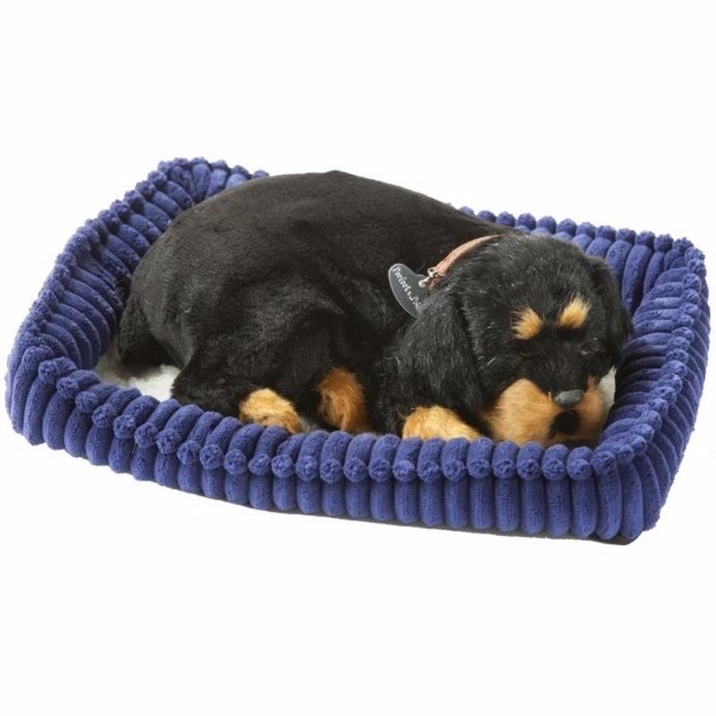 Echte slapende Rottweiler pup
