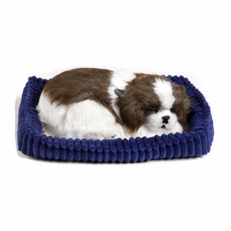 Echte slapende Shih Tzu pup